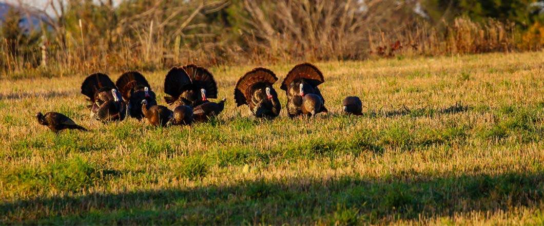 Be Prepared For Turkey Season